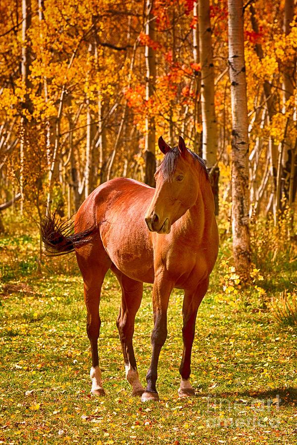 Fall Aspens Wallpaper Beautiful Horse In The Autumn Aspen Colors Photograph By