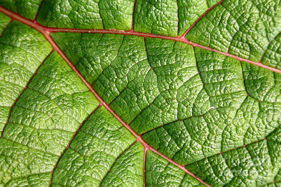 big green leaf 5d22460