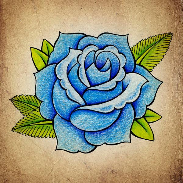 Blue Rose Drawing Samuel Whitton