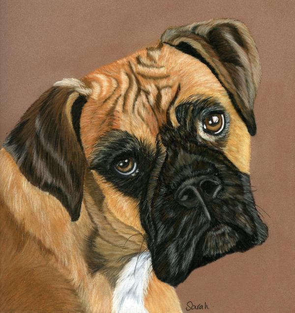 Boxer Dog Painting Sarah Dowson