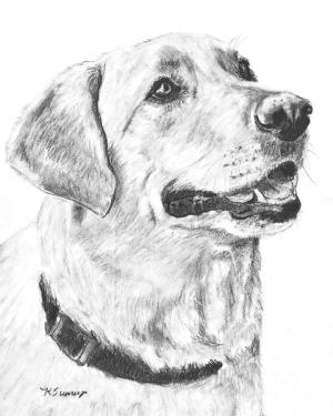 lab labrador drawing yellow charcoal profile drawings retriever dog sumners kate draw pencil puppy puppies fineartamerica golden animals which animal
