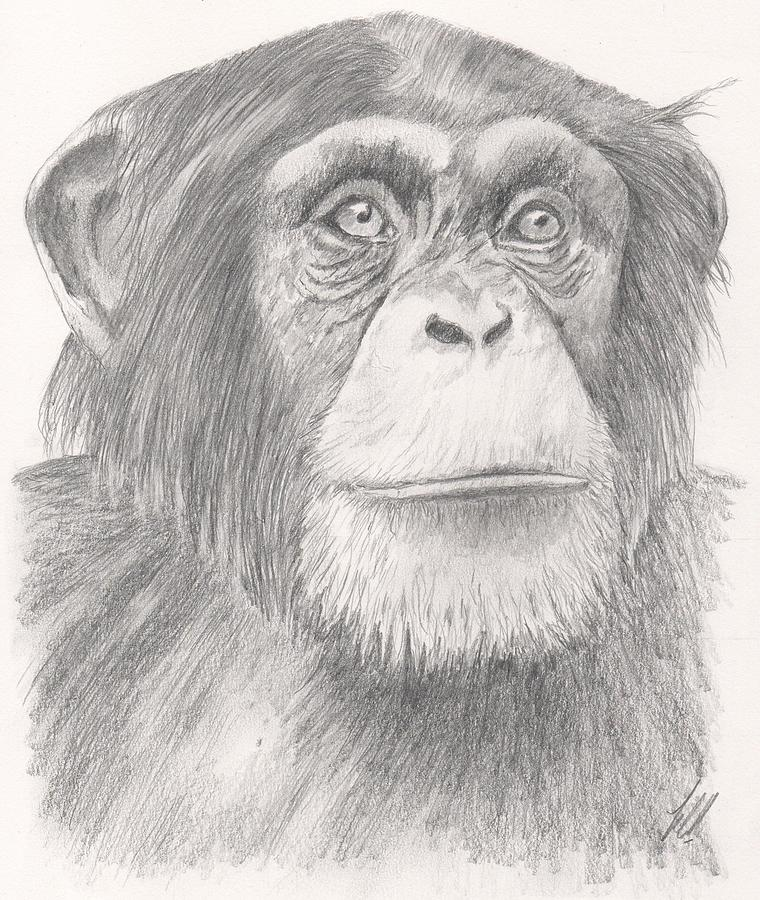 chimpanzee by keith miller