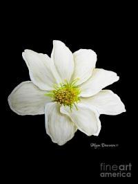 Decorative White Floral Flower Art Original Chic Painting ...