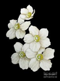 Decorative White Floral Flowers Art Original Chic Painting ...
