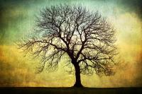 Digital Art Tree Silhouette Photograph by Natalie Kinnear