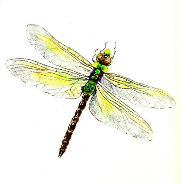 Dragonfly Paintings Art