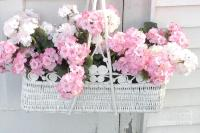 Dreamy Pink White Hydrangeas In Hanging Basket - Shabby ...