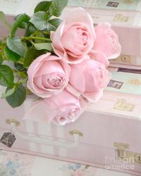 Dreamy Shabby Chic Pastel Pink Roses On Pink Suitcases ...