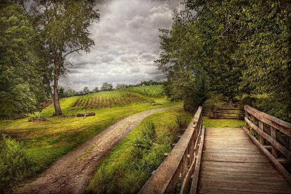 farm - landscape jersey crops