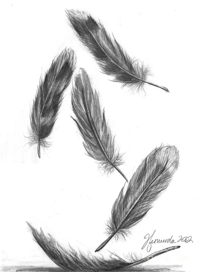 Black Bird Feathers Meaning