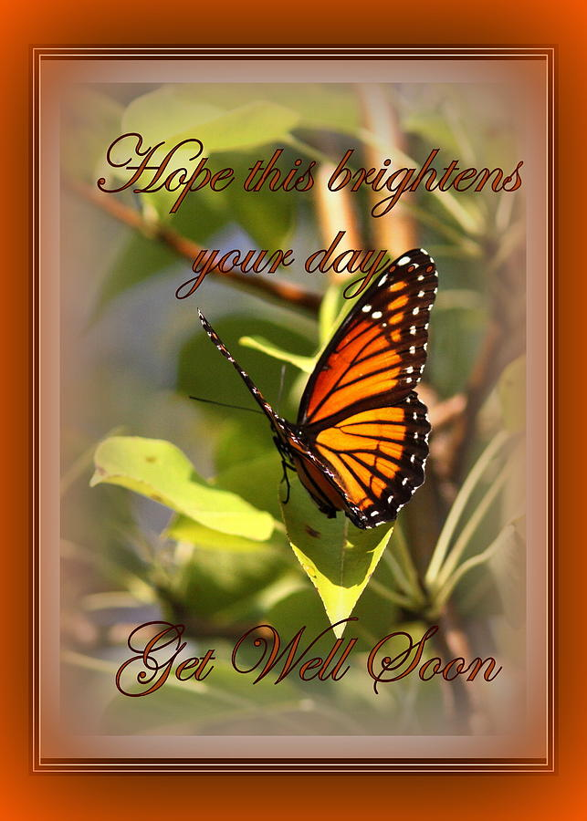Get Well Soon  Card  Butterfly Photograph by Travis Truelove
