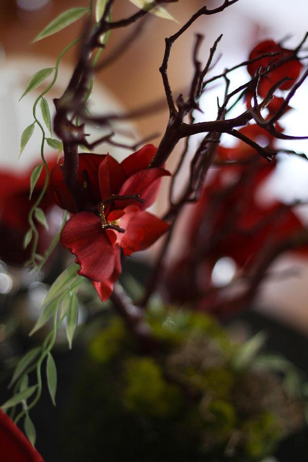 gothic flowers by deidra