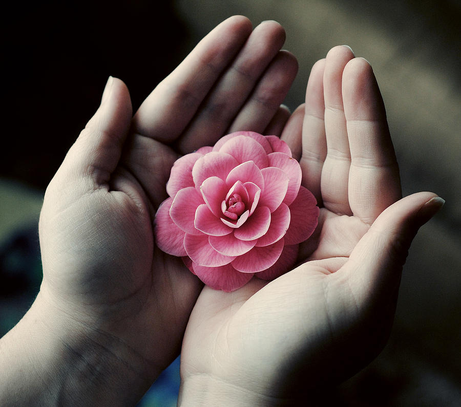hands cupping flower by