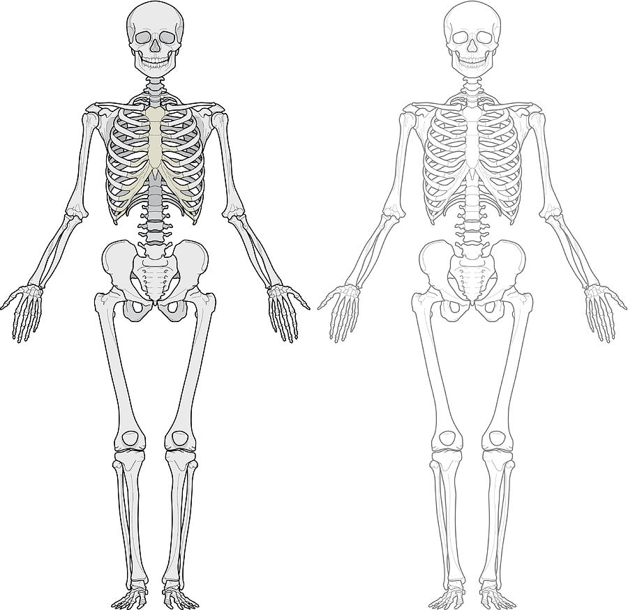 Human Body, Skeleton by Red_frog