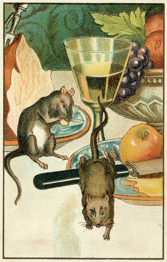 Le Rat Des Villes Et Le Rat Des Champs : villes, champs, Ville, Champs', Drawing, Evans, Picture, Library
