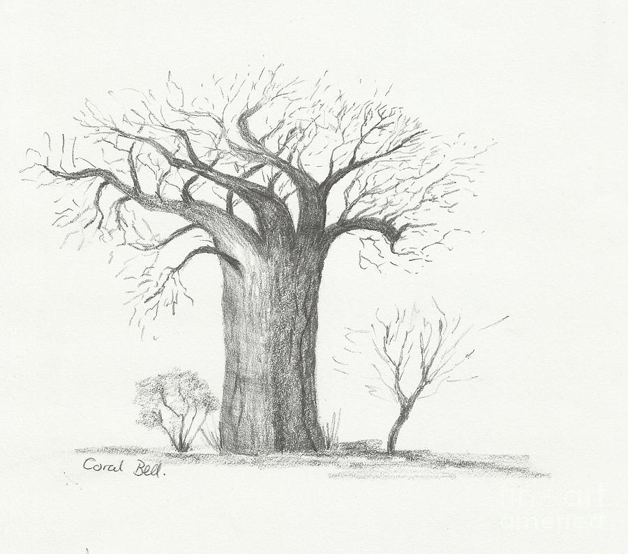 Lone Baobab Tree Drawing by Coral Bell