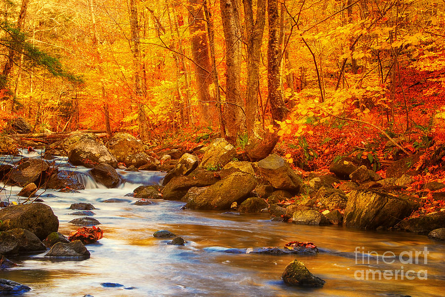 Fall Foliage Wallpaper For Iphone Macedonia Brook State Park Autumn Colors Photograph By