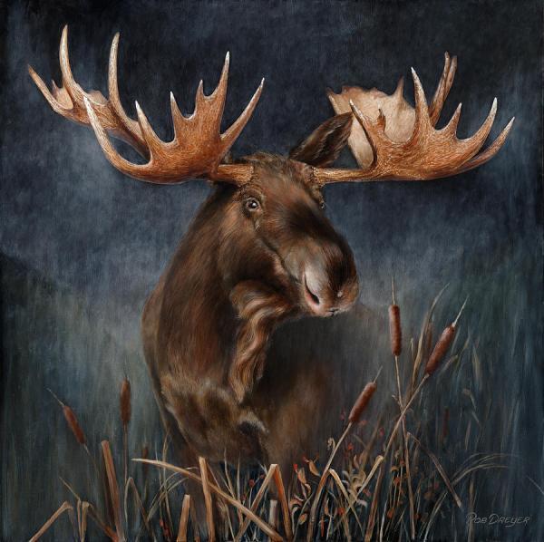 Moose Wildlife Art Paintings
