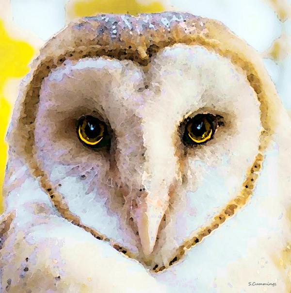 Owl Art Painting Love