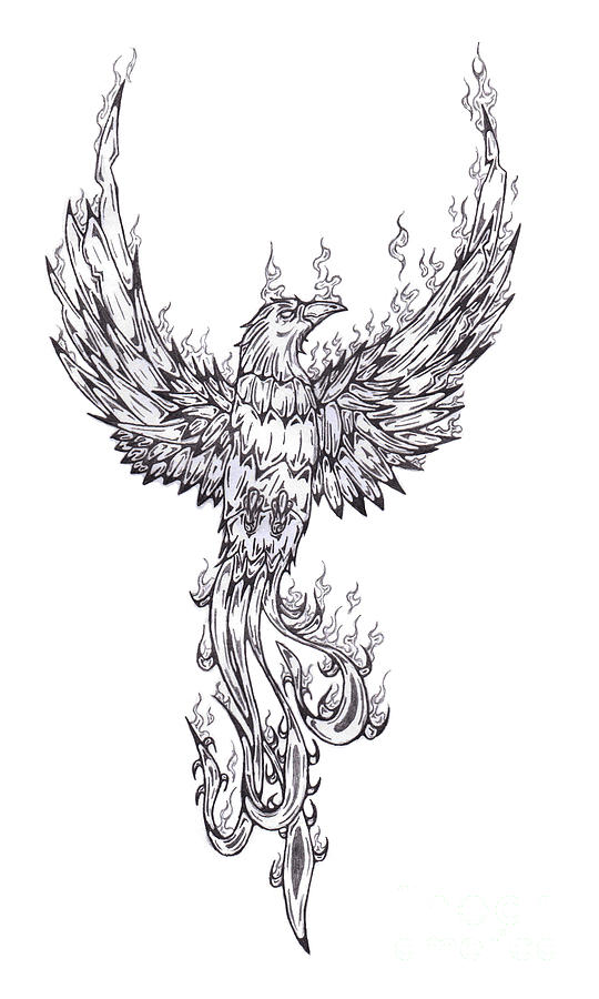 Phoenix Drawing by Matt Sutherland