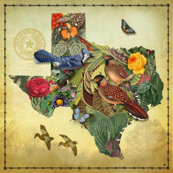Plant Map Of Texas Painting Gary Grayson