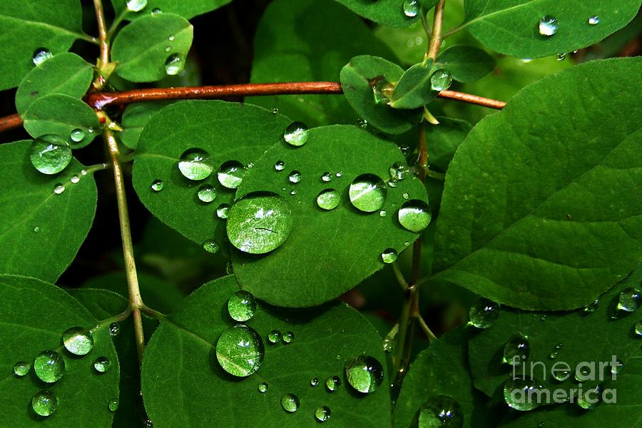 Raindrops Wallpaper Iphone Raindrops On Leaves Photograph By Steve Patton