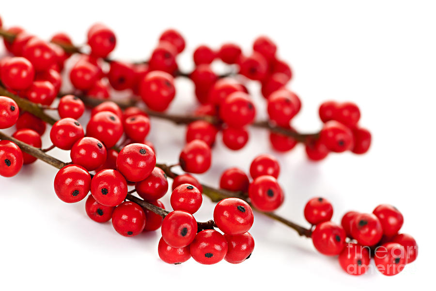 red christmas berries by