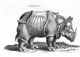 Rhinoceros No 76 From Historia Animalium By Conrad Gesner ...