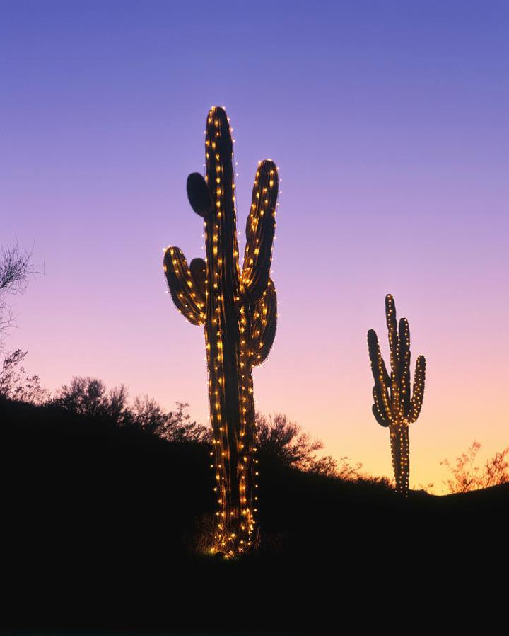 Decoratingspecial Com: Christmas Lights On Saguaro Cactus