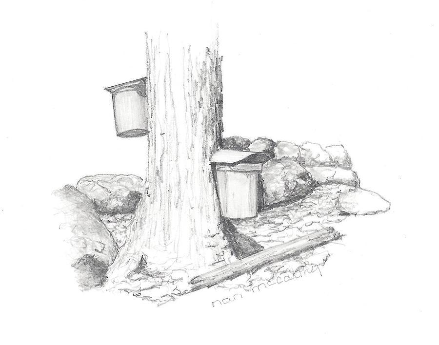 Sap Buckets Drawing by Nan McCarthy