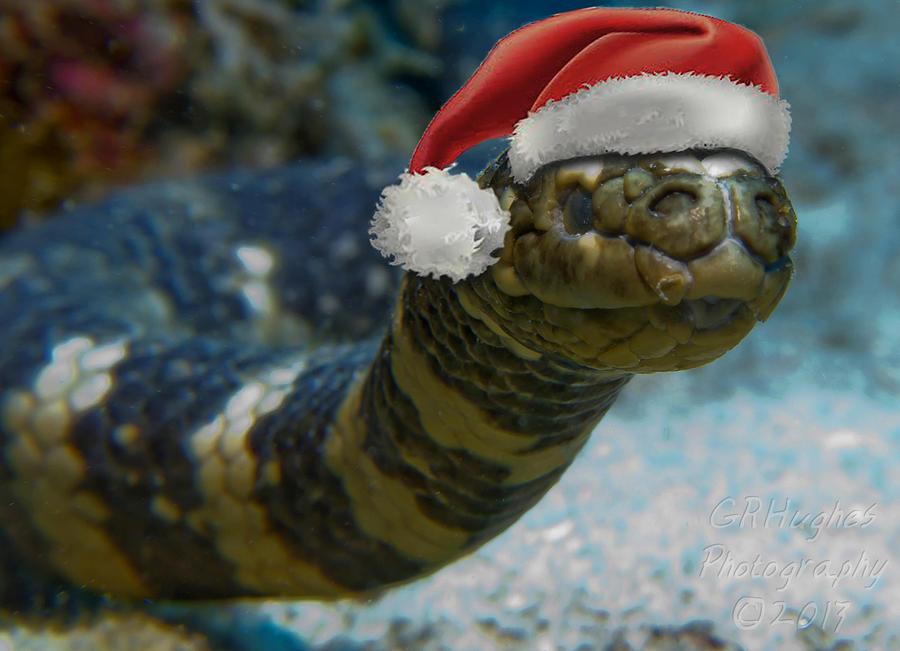 Sea Snake With Santa Hat Photograph By Gary Hughes