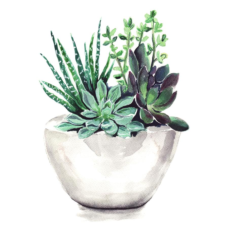 Cute Shelf Wallpaper For Ipad Succulents Painting By Bridget Davidson