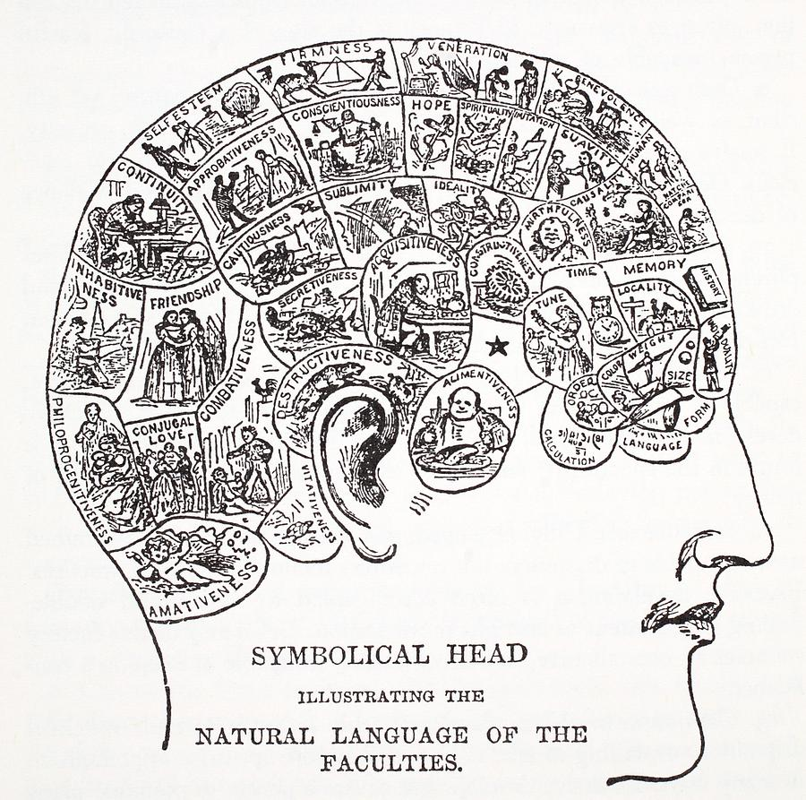 Symbolical Head Showing The Natural Drawing by English School
