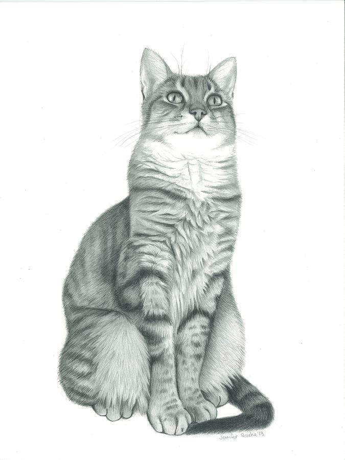 Tabby Cat Drawing By Jennifer Slouha