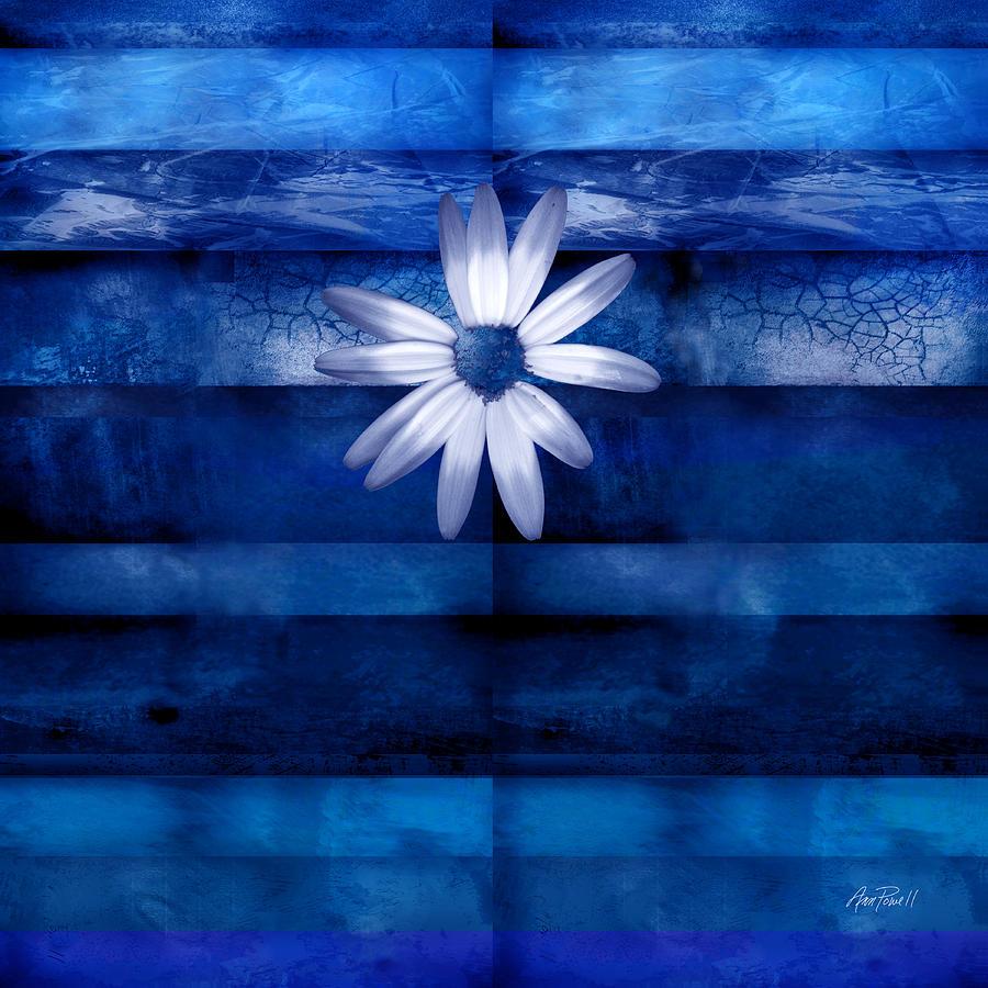 white daisy on blue