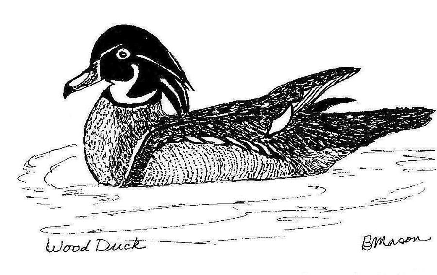 Wood Duck Drawing by Becky Mason