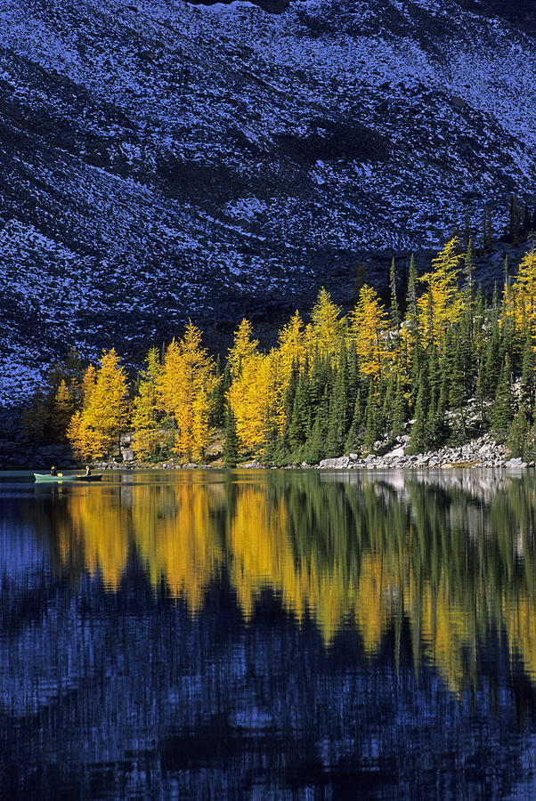 Autumn Alpine Larch Trees Lake Agnes Photograph by John