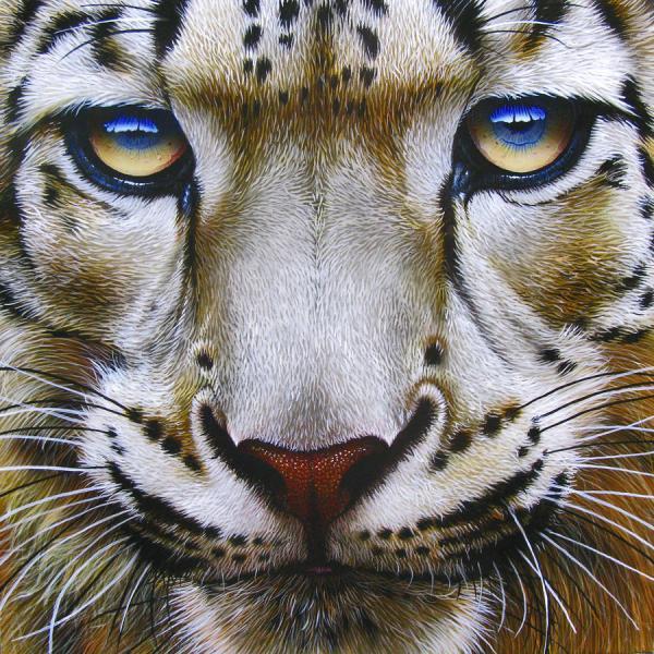 Snow Leopard Painting - Fine Art Print