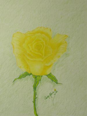yellow rose drawing gwen drawings flowers 8th uploaded june which