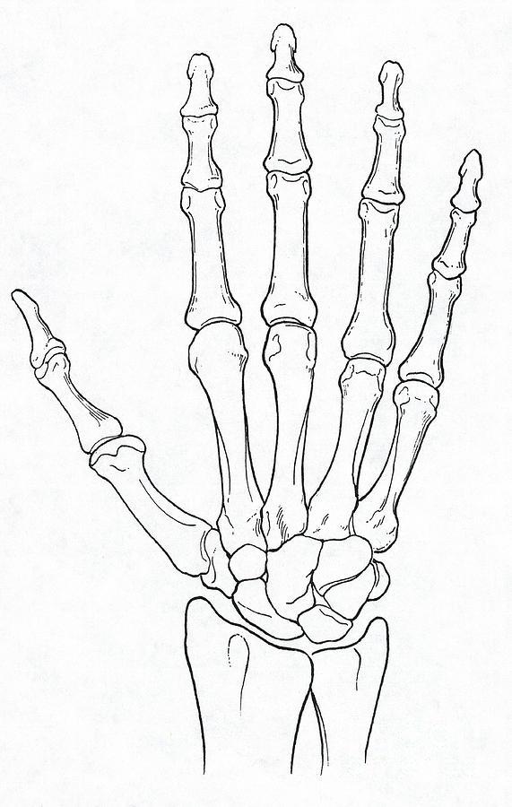 blank hand diagram