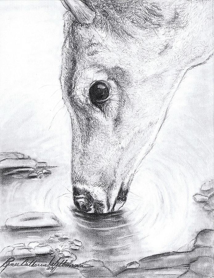 Deer Drinking Water Drawing : drinking, water, drawing, Needed, Drink, Drawing, Renee, Catherine, Wittmann