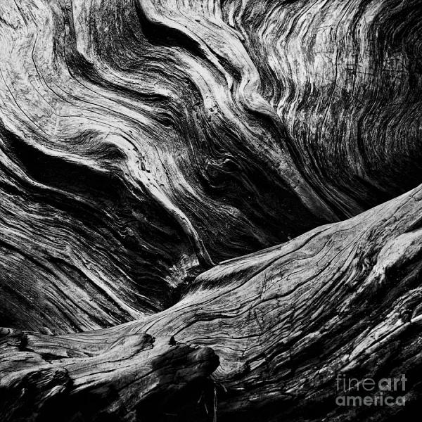 Black and White Abstract Tree Paintings