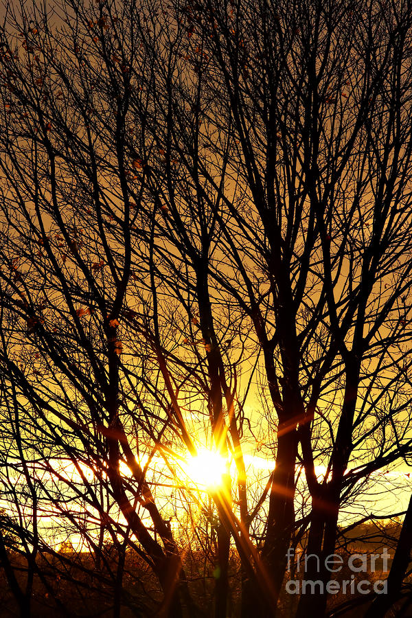https://i0.wp.com/images.fineartamerica.com/images-medium-large/autumn-sun-behind-branches-of-bare-tree-michal-boubin.jpg