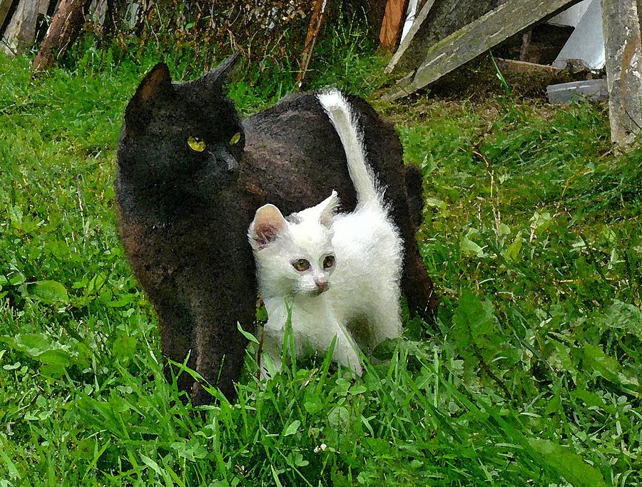 black cat defends his