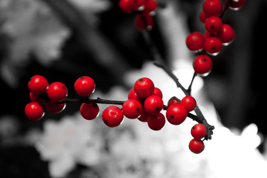 christmas berries by heidi