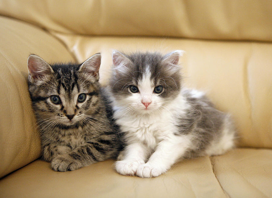 Wallpapers Fofo Cutes Bringing Kitten Home Essential Kitten Supplies For A