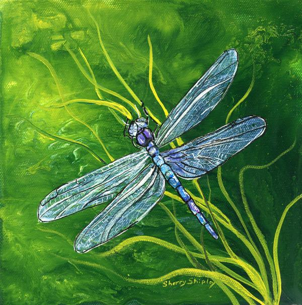 Dragonfly Painting Sherry Shipley