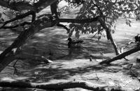 Ducks In The Shade In Black And White Photograph by Rob Hans