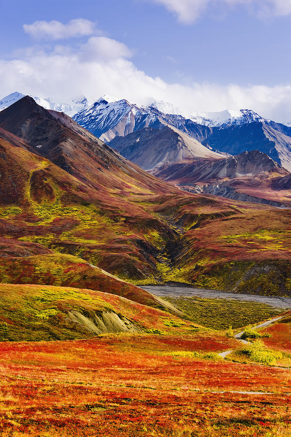 Fall Leaves Iphone 6 Plus Wallpaper Fall Colours And Alaska Range Denali Photograph By Yves