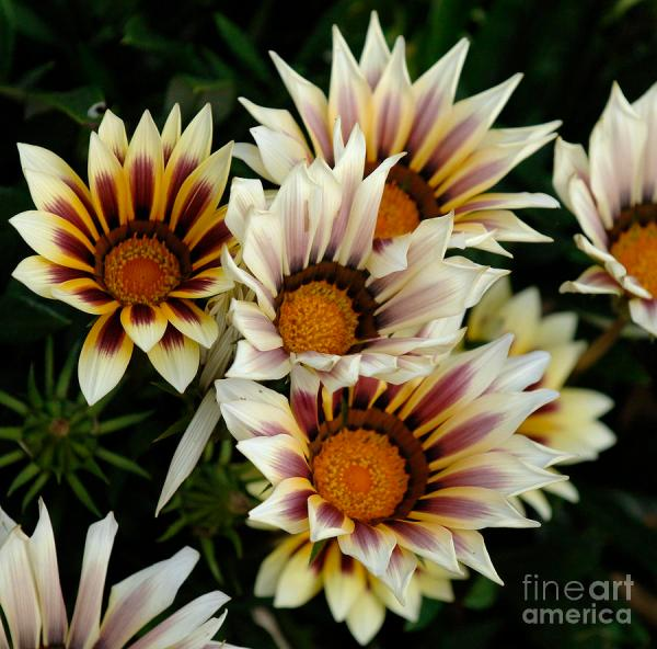 Flowers Of Zealand 2 Bob Christopher